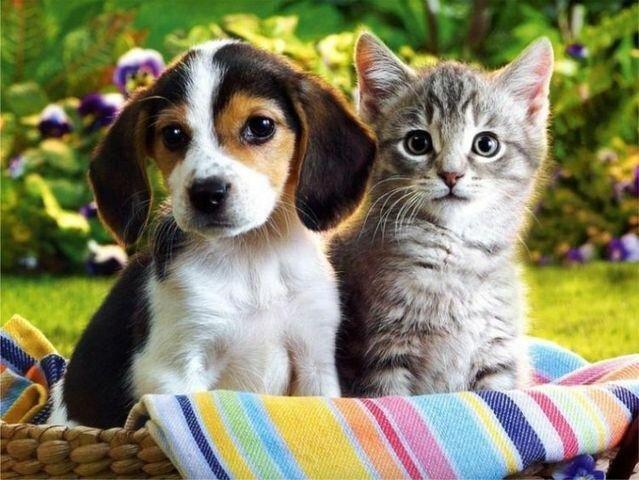 احتمال ابتلای حیوانات خانگی به ویروس کرونا